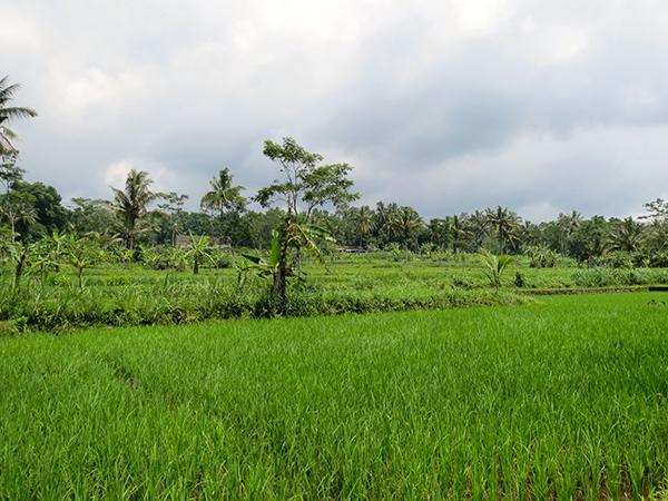 Yogyakarta lush scenery