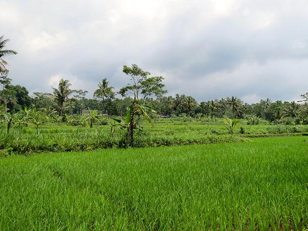 En route to Mount Merapi, Yogyakarta